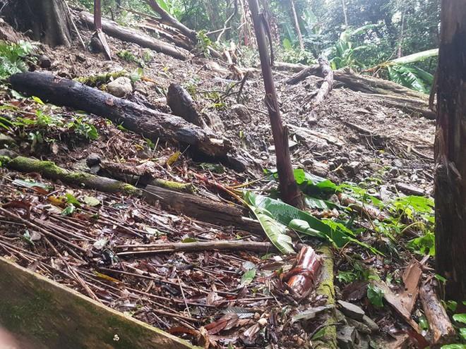 Vườn sâm Ngọc Linh của người dân Quảng Nam bị hư hại nặng nề do mưa bão - Ảnh 1.