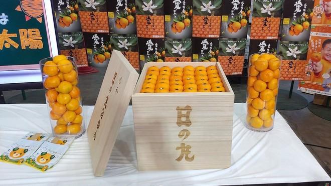Thùng quýt Nhật Bản được đấu giá hơn 222 triệu đồng - Ảnh 1.