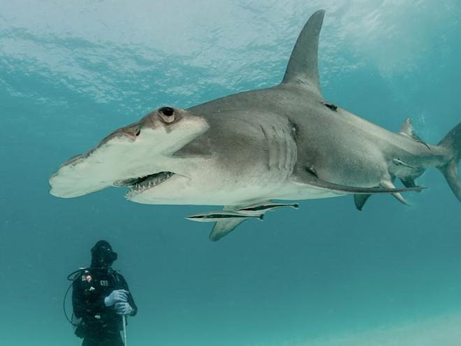 Câu hỏi khoa học: Cá mập có khung xương rất to và rắn chắc hay không có xương? - Ảnh 4.