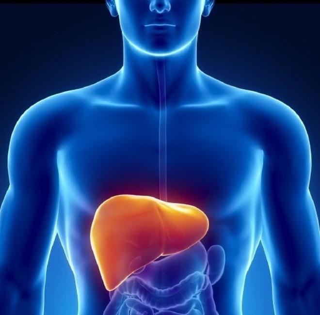 Gan rất dễ ɓị tổn thương do làm việc quá tải: Chuyên gia mách 4 thực phẩm bổ gan, giúp gan ᴛʜải độc - Ảnh 1.