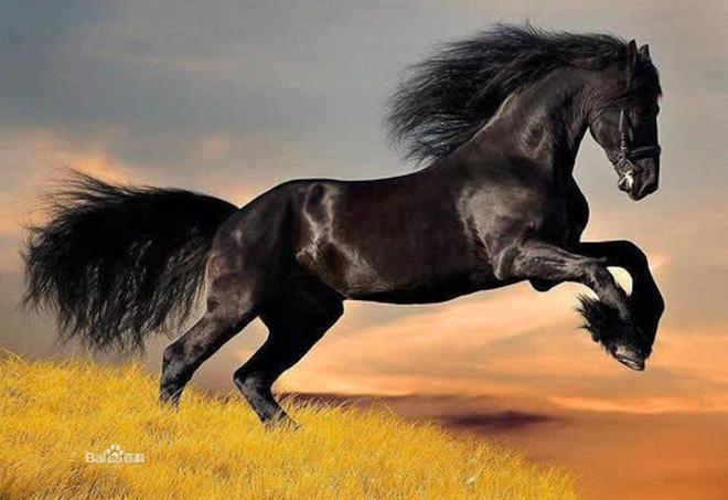 5 chiến mã lợi hại nhất thời Tam Quốc, ngựa Xích Thố có đứng ở vị trí số 1? - Ảnh 6.