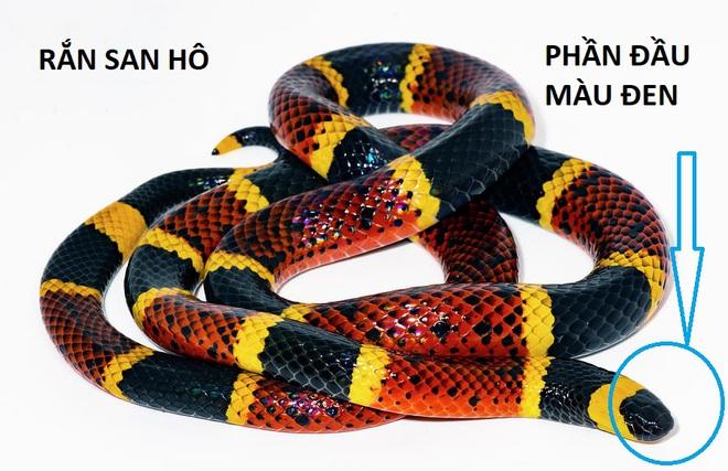 Nhìn na ná nhau nhưng nếu cầm nhầm 1 trong 4 con rắn dưới đây, bạn có thể trả giá rất đắt - Ảnh 3.