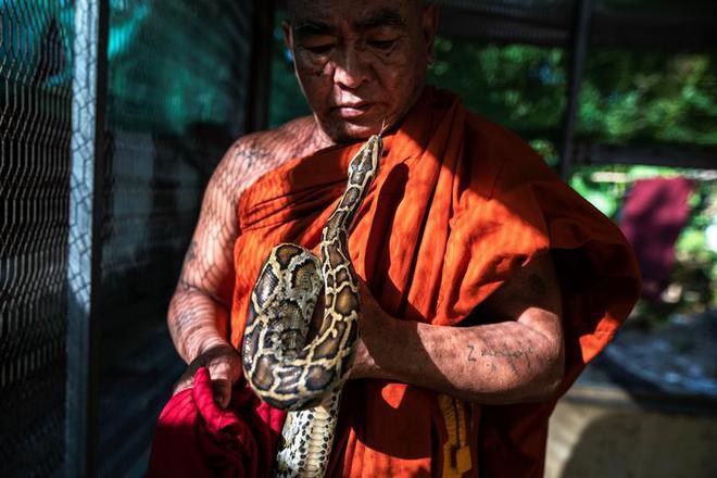 7 ngày qua ảnh: Nhà sư chơi với trăn khổng lồ trong tu viện ở Myanmar - Ảnh 3.