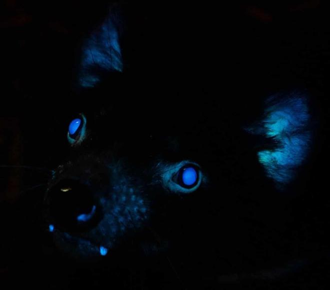 Bí ẩn những động vật phát sáng được tìm thấy tại Úc và câu trả lời ở quá khứ gần 20 năm trước - Ảnh 1.