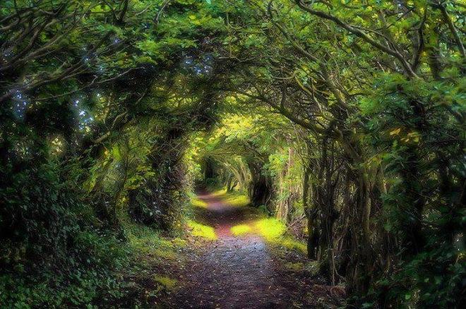 Bạn sẽ chọn đi trên con đường rừng nào? Phía trước con đường đầy cây xanh ẩn chứa nhiều điều thú vị - Ảnh 1.