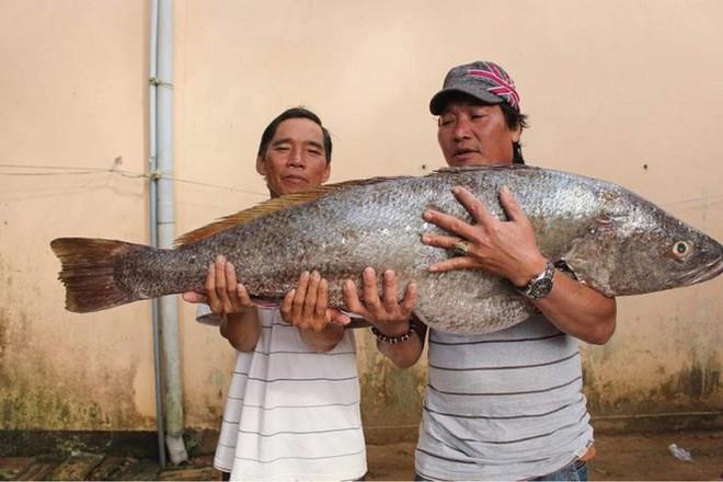 Ngư dân Quảng Ngãi bắt được cá lạ, nghi cá sủ vàng quý hiếm - Ảnh 1.