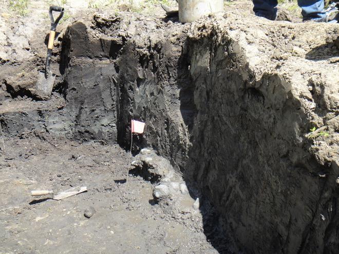 Đang thu hoạch quả chín trong vườn thì thấy hòn đá kỳ lạ, cả gia đình đào lên mới tá hỏa phát hiện ra thứ ẩn giấu bên dưới - Ảnh 7.