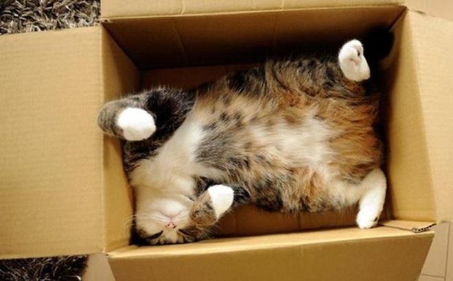 """Tò mò chui vào thùng hàng, chú mèo bị """"ship"""" đi hơn 1.000 cây số và chuyến du lịch bất đắc dĩ khiến nhà chủ lo sốt vó cả tuần"""