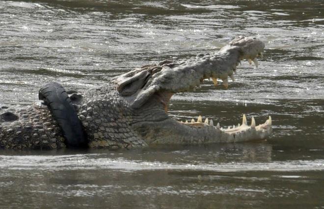 24h qua ảnh: Cá sấu khổng lồ bị kẹt cổ trong lốp xe - Ảnh 3.
