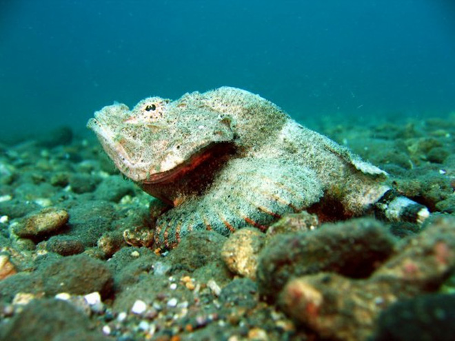Cá xấu xí, khuôn mặt hung tợn chỉ cho gia cầm ăn thành món đắt đỏ, giá gần chục triệu/con - Ảnh 2.