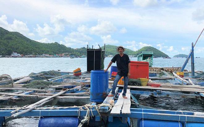 Nuôi cá lồng bè ở Nam Du, thu hàng trăm triệu mỗi năm
