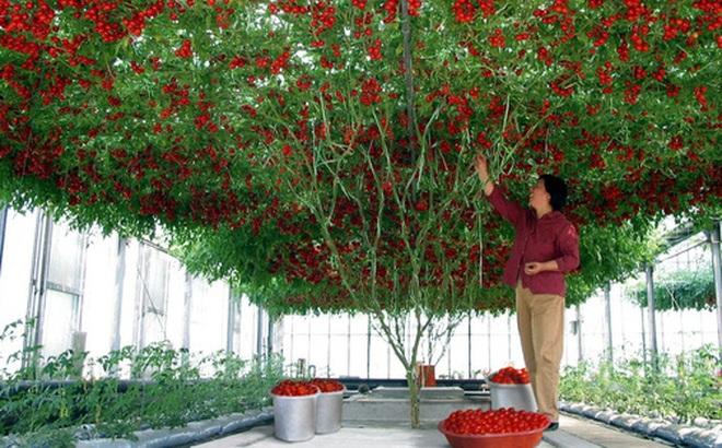 """Những gốc cây """"mắn đẻ"""" nhất thế giới khiến người xem tưởng nhầm là đột biến"""