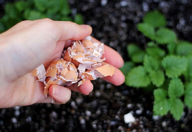 Chôn vỏ trứng và chuối xuống đất, hành động tưởng đơn giản nhưng lại giúp vườn cây của bạn tốt hơn rất nhiều - Ảnh 5.