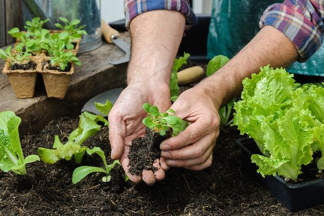 Chôn vỏ trứng và chuối xuống đất, hành động tưởng đơn giản nhưng lại giúp vườn cây của bạn tốt hơn rất nhiều - Ảnh 8.
