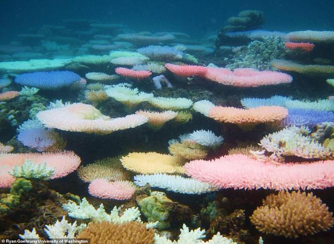 Ngạc nhiên cách san hô tự bảo vệ mình trước sự gia tăng nhiệt độ nước biển - Ảnh 1.