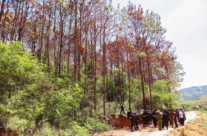 Truy tố kẻ thuê 30 triệu đồng để phá 1 ha rừng - Ảnh 3.