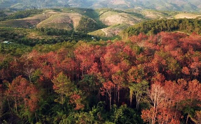 Truy tố kẻ thuê 30 triệu đồng để phá 1 ha rừng