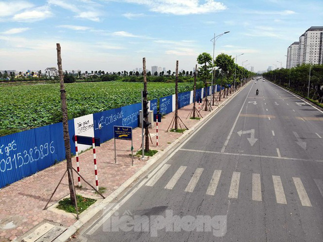 Hàng loạt cây xanh chết khô trên đường nghìn tỷ ở Hà Nội - Ảnh 2.