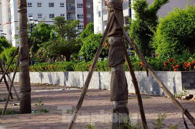 Hàng loạt cây xanh chết khô trên đường nghìn tỷ ở Hà Nội - Ảnh 11.