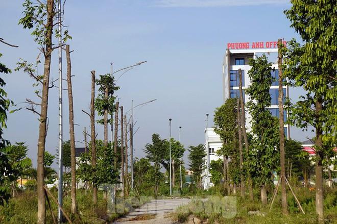 Hàng loạt cây xanh chết khô trên đường nghìn tỷ ở Hà Nội - Ảnh 13.