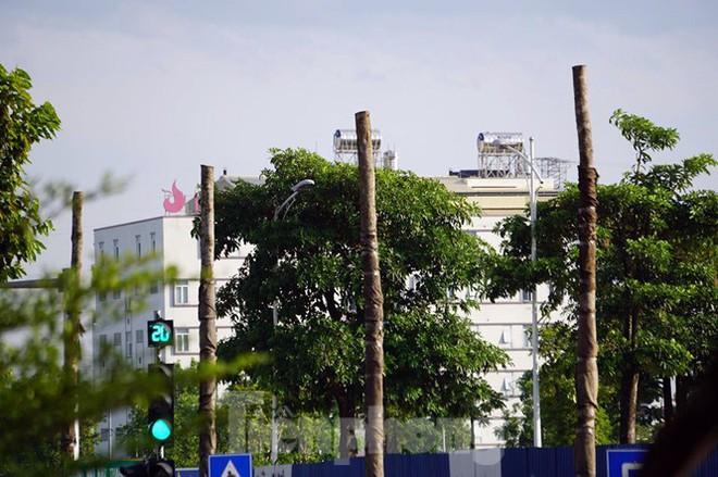 Hàng loạt cây xanh chết khô trên đường nghìn tỷ ở Hà Nội - Ảnh 4.