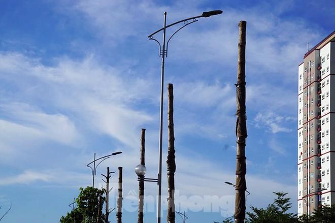 Hàng loạt cây xanh chết khô trên đường nghìn tỷ ở Hà Nội - Ảnh 5.