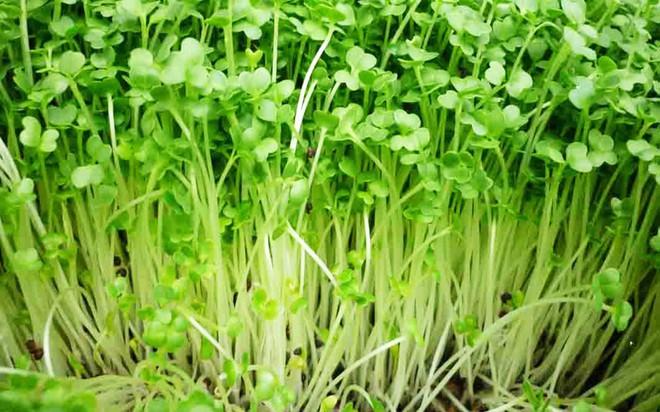 10 loại rau củ chứa độc nếu không được nấu chín kỹ - Ảnh 7.