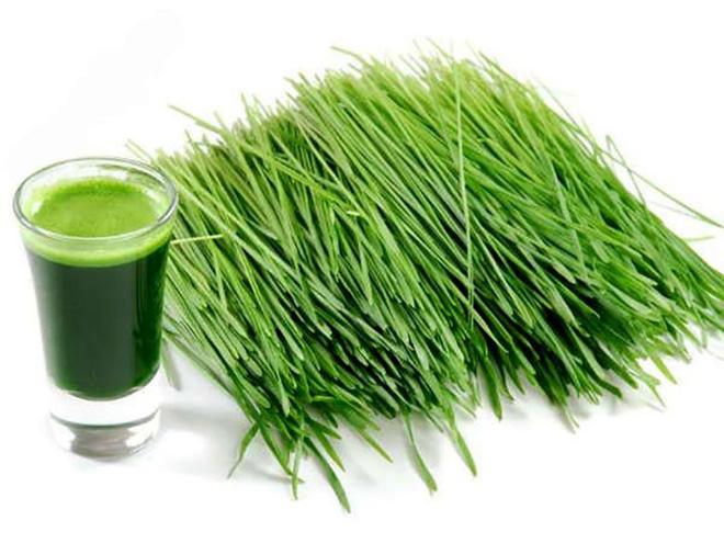 Thực phẩm giàu protein giúp giảm cân hiệu quả - Ảnh 1.
