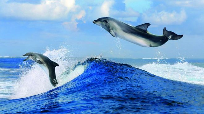 Sống thú vị như cá heo: Chơi được với cá mập; ở chung hồ 1 tháng nhớ mặt 20 năm! - Ảnh 1.