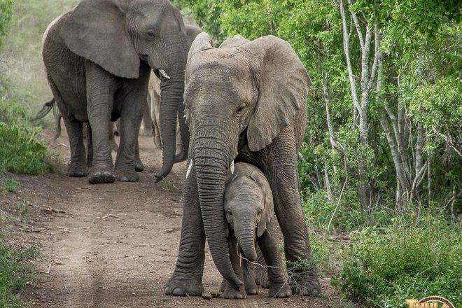 Vì sao đàn voi đi bộ 12 tiếng đến đưa tiễn một người qua đời, viếng mộ suốt 7 năm? - Ảnh 4.