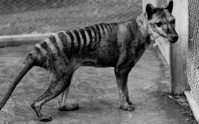 Những ví dụ cho thấy tiến hóa đôi khi cũng 'hà tiện', tận dụng cùng một đặc điểm cho hai loài khác nhau
