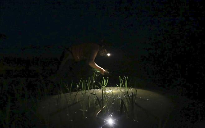 VIDEO: Xem nông dân Hà Nội đeo đèn pin cấy lúa từ hơn 3 giờ sáng  - Ảnh 2.