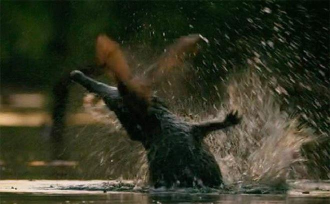 Cá sấu mai phục dưới sông để bắt dơi