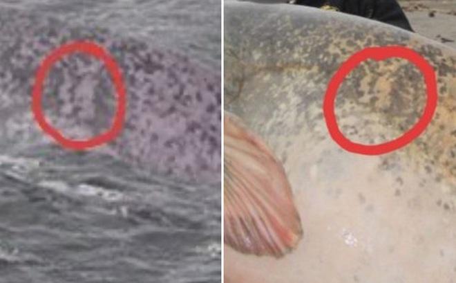 Đã tìm ra sự thật bất ngờ về bức hình ai cũng tưởng là 'Quái vật hồ Loch Ness' đang gây bão trên mạng xã hội