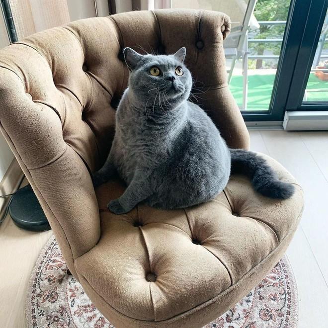 Cảm động câu chuyện mèo béo xiên vẹo nổi tiếng khắp mạng xã hội - Ảnh 2.