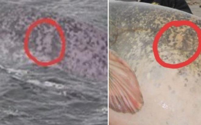 """Đã tìm ra sự thật bất ngờ về bức hình ai cũng tưởng là """"Quái vật hồ Loch Ness"""" đang gây bão trên mạng xã hội"""