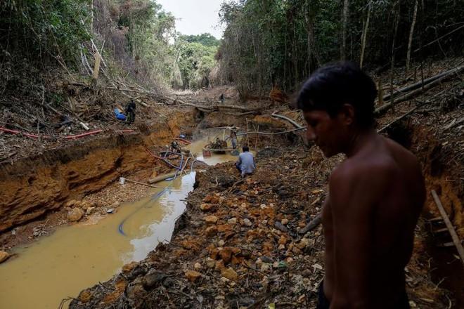 'Cơn sốt vàng Amazon đe dọa sự sinh tồn của bộ lạc lớn nhất Brazil - Ảnh 1.