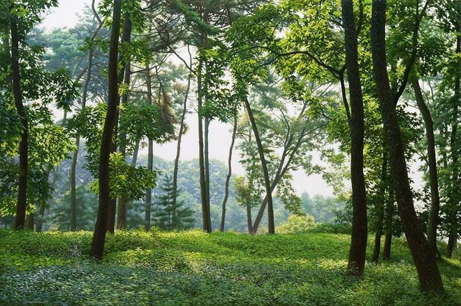 Hình ảnh cánh rừng xanh ngát xanh đem lại cảm giác yên bình khó tả nhưng ẩn chứa đằng sau đó là sự thật khó tin - Ảnh 6.