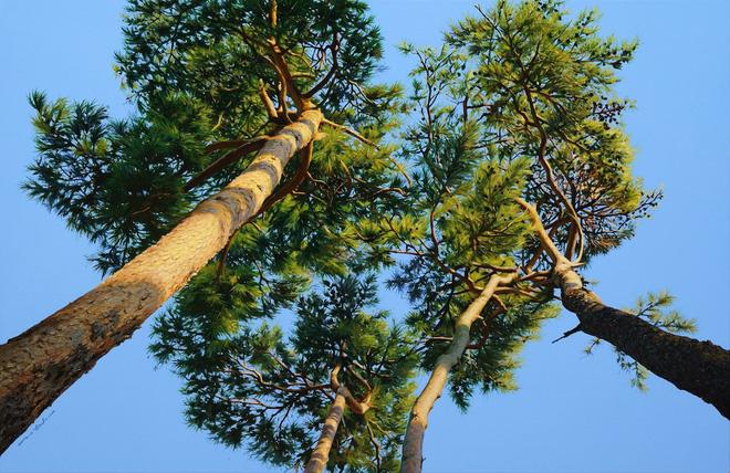 Hình ảnh cánh rừng xanh ngát xanh đem lại cảm giác yên bình khó tả nhưng ẩn chứa đằng sau đó là sự thật khó tin - Ảnh 7.