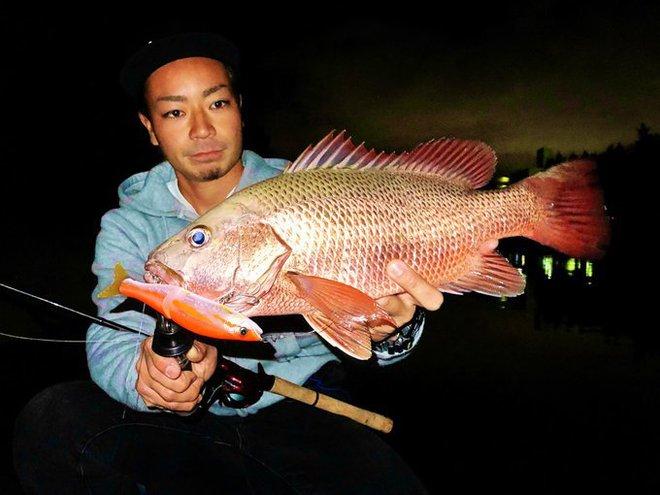 Sự thật bất ngờ về con cá màu sắc gây sốt ở Nhật Bản - Ảnh 3.