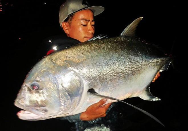 Sự thật bất ngờ về con cá màu sắc gây sốt ở Nhật Bản - Ảnh 4.