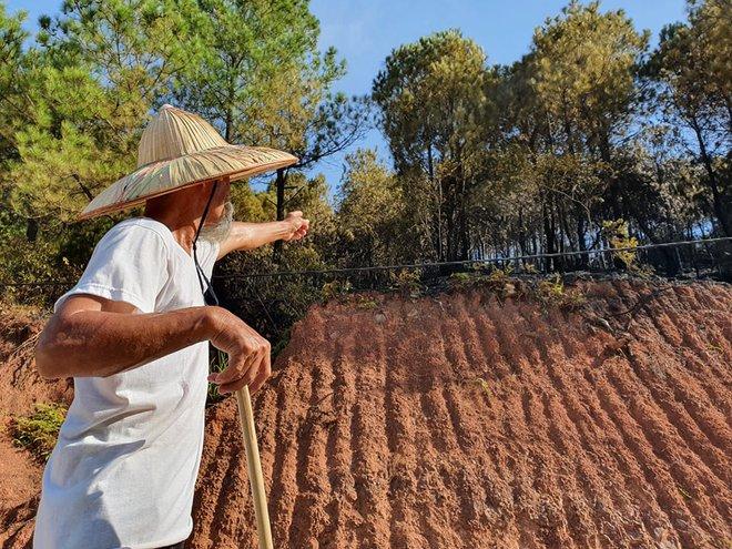 Cảnh hoang tàn ở cánh rừng thông già sau nhiều đợt cháy hoành hành những ngày qua - Ảnh 13.