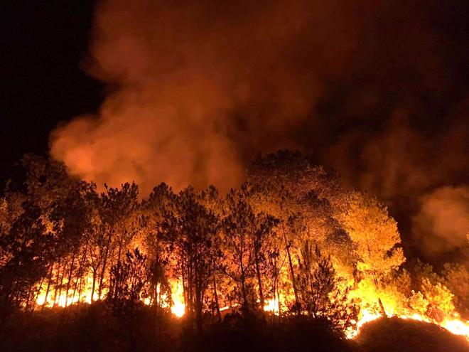 Cảnh hoang tàn ở cánh rừng thông già sau nhiều đợt cháy hoành hành những ngày qua - Ảnh 1.