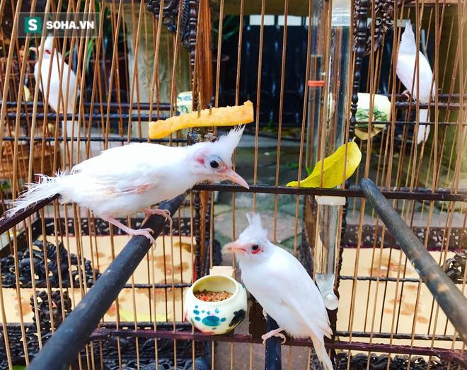 Choáng với chi phí chăm sóc gần 100 triệu/tháng của đàn chim quý tộc có 2 bảo mẫu riêng - Ảnh 2.