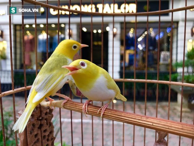 Choáng với chi phí chăm sóc gần 100 triệu/tháng của đàn chim quý tộc có 2 bảo mẫu riêng - Ảnh 6.