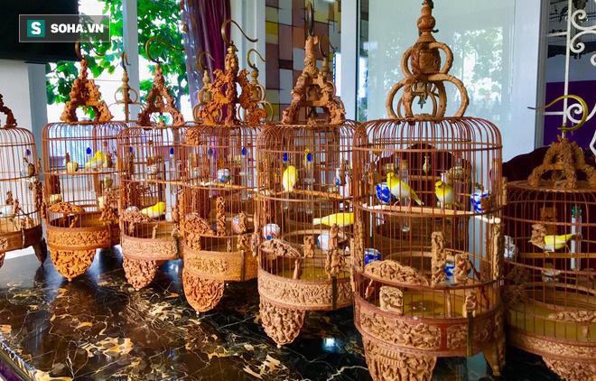Choáng với chi phí chăm sóc gần 100 triệu/tháng của đàn chim quý tộc có 2 bảo mẫu riêng - Ảnh 7.