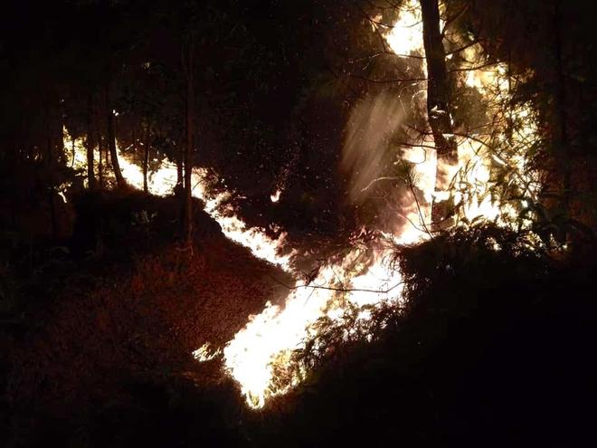 Cảnh hoang tàn ở cánh rừng thông già sau nhiều đợt cháy hoành hành những ngày qua - Ảnh 8.
