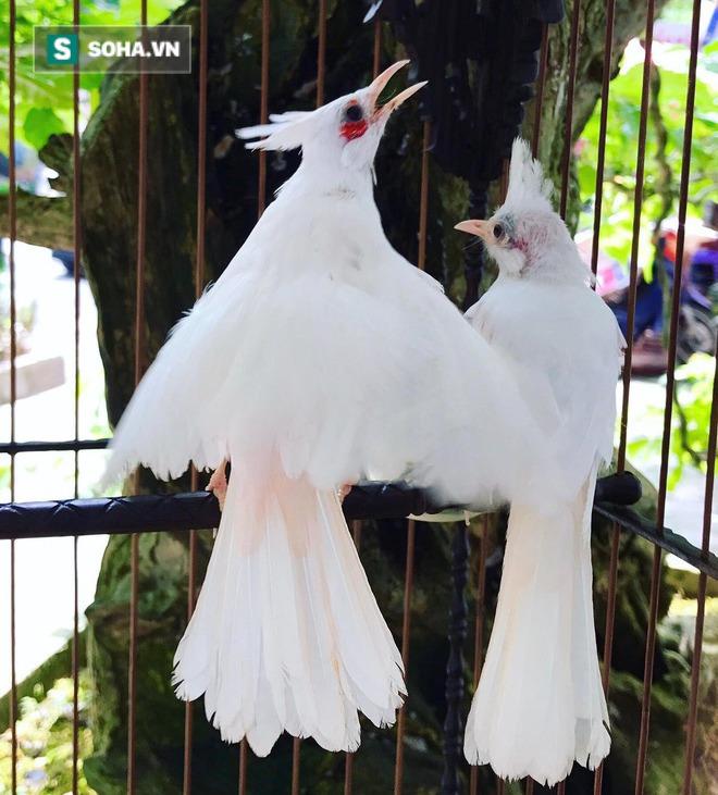 Choáng với chi phí chăm sóc gần 100 triệu/tháng của đàn chim quý tộc có 2 bảo mẫu riêng - Ảnh 4.