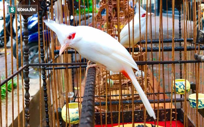 """Độc nhất tại Việt Nam: 72 con chim """"quý tộc"""" trị giá 10 tỷ đồng, có 2 bảo mẫu riêng chăm sóc"""