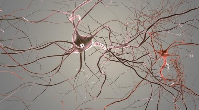 Các nhà khoa học ghi lại được khoảnh khắc não bộ dọn dẹp các tế bào thần kinh bị chết - Ảnh 2.